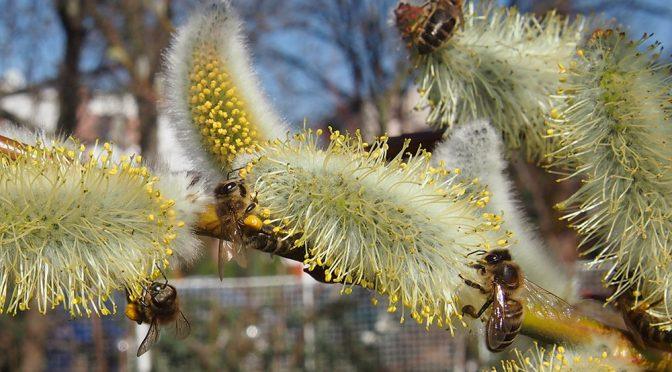 Včely – jak přilákat na ovocnou zahradu?